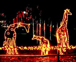 Hogle Zoo Holiday Lights and Reindeer Parade, Salt Lake City, Utah, Children's Activities, Animals, Christmas Lights