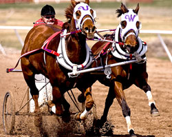 Chariot Racing, Ogden, Utah, Golden Spike Event Center Arena, Racing, Sports, HOrses
