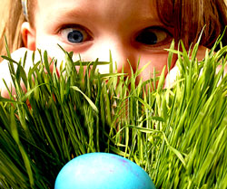 Easter Egg Hunt, South Jordan, Utah, Children's Activities, Family, Easter, Holiday