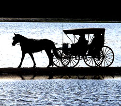 Carriage Rides, Homestead Resort, Heber, Utah, Park City, Utah, Dating Ideas, Wasatch Mountains, County, HOrses