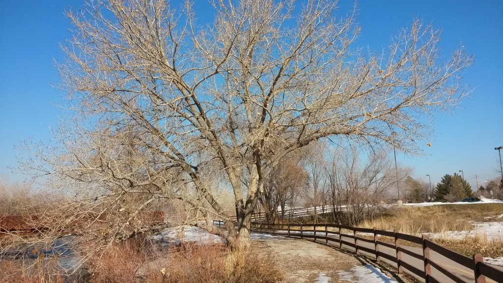 20140118_134223 Jordan River Parkway Trail – Germania Park, Murray, Utah